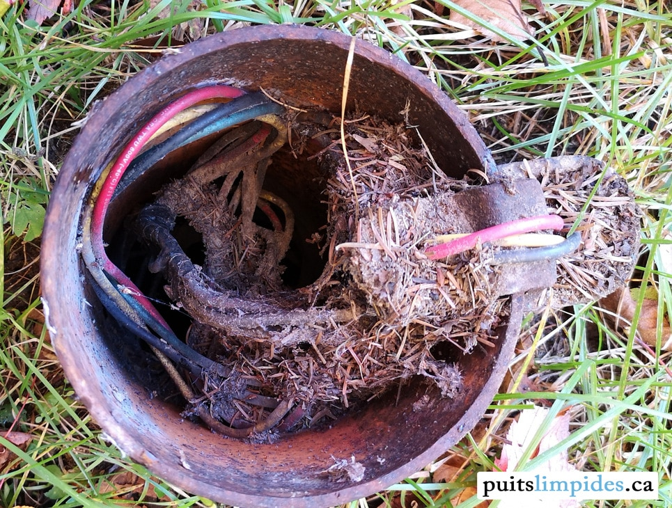 Un petit animal s'est introduit dans ce puits artésien pour y faire son nid. On peut imaginer la quantité de matière organique qui s'est décomposé dans l'eau.