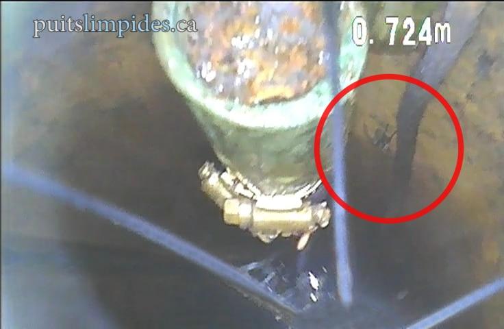 Les araigées tissent leurs toiles dans les puits artésiens pour capturer d'autres insectes.